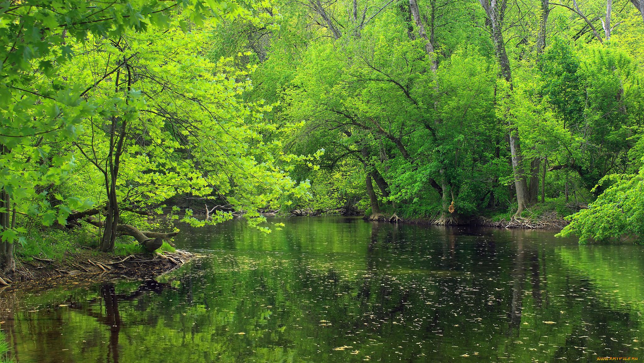 зиму картинки на рабочий стол речка и лес милая, днем рожденья
